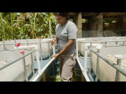 Vanessa Green has embraced aquaponics as a farming method.